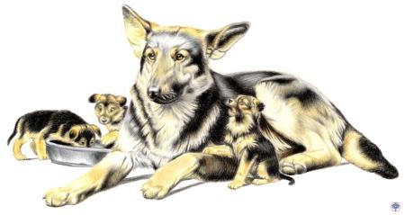 famiglia-di-pastore-tedesco1